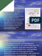 4F Gluconeogenesis