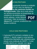 4D-Ciclo Das Pentoses Ou Fosfogluconato