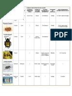 tableau insectes du gazon