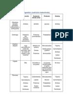 Tabla de Digestion Quimica Organos y Sus Enzimas