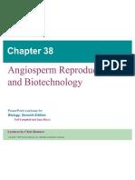 38 Angiosperms