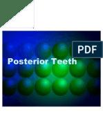 5. Premolars