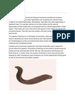 Leech & Hookworms