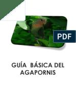 GUÍA  BASICA DEL AGAPORNIS