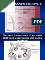 Fisiologia e Sviluppo Midollo