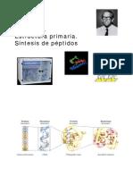 Tema 11 Proteinas Estructura Primaria[1]