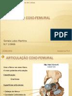 Articulação coxo-femural 2