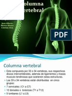 Columna Vertebral Con Ligamentos