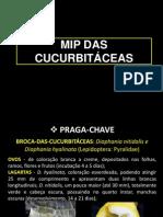 MIP curcubitaceas