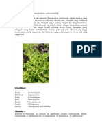 Senopodii Herba