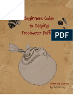 Beginner's Guide to Keeping Freshwater Puffers