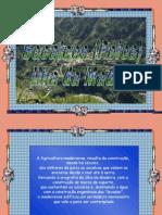 Socalcos (Poios) - Ilha da Madeira