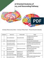 3.5 - Brain, Sensory, Descending Pathway