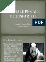 Animale Pe Cale de Disparitie 1