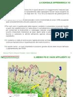 Sistema Regione Reti Forti - 366-438