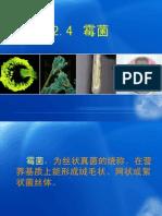 第二章 微生物类群及形态结构(霉菌)