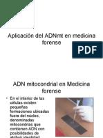 ADN Mitocondrial en Medicina Forence