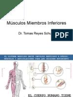 Anatomia Miembros inferiores