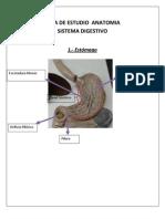 guiaestudioanatomiasd-100926115036-phpapp02