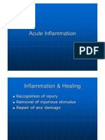 8 Acute Inflammation IW