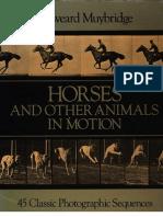 Como Desenhar Animais Em Movimento