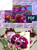 Dp - Orchidees