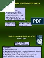 Fisiologia Digestiva Motilidad Intestino Delgado 5967