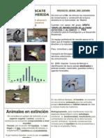 ANIMALES  EN  PELIGRO  DE  EXTINCIÒN  CARLOS  SEC. NUM. 71
