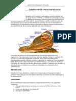 21 Clasificacion moluscos