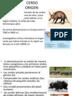 Generalidades CERDO