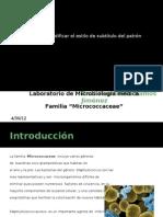 Micrococacceae