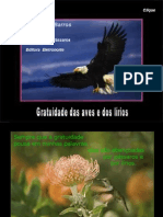 A Gratuidade Das Aves e Dos lírios Por Manoel de Barros
