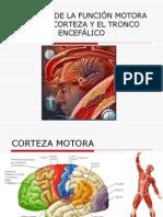 Clase8-Control Funcion Motora Por Corteza y Tronco Encefalico