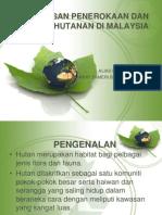 Kesan penerokaan hutan
