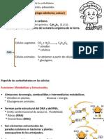12carbohidratos41011