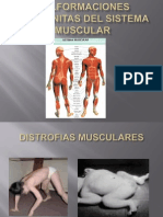 MALFORMACIONES CONGÉNITAS DEL SISTEMA MUSCULAR DATA