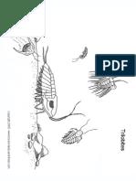 Cp Trilobites