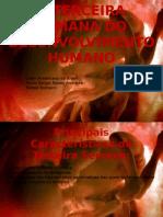 A Terceira Semana Do to Humano-Anatomia