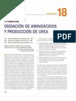 Oxidacion de Aminoacidos y Produccion de Urea