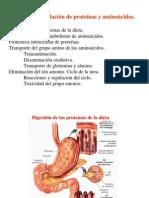 Degradacionaminoacidos