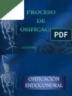 proceso_de_osificacio