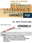 Clase Introductoria Al TP38 Cerebelo