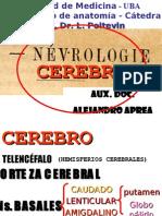 Clase Introductoria Al TP40 Telencéfalo