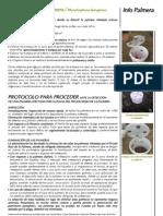 Folleto Rhynchophorus Ferrugineus Esp 2