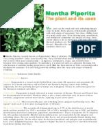 The Mint Plant