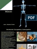 Fatouh - 4to año - Esqueleto Humano