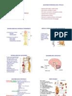 01_neuroanatomia