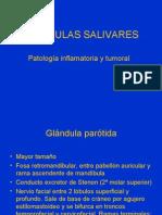 GLANDULAS SALIVARES