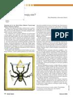 Jak pająki snują sieć?