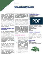 saw_palmetto.pdf